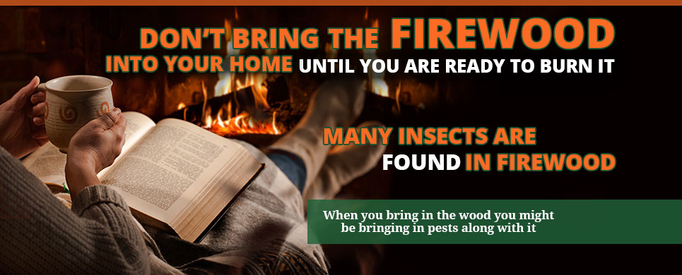 Don't the Bring Firewood Into Your Home Until You Are Ready to Burn It