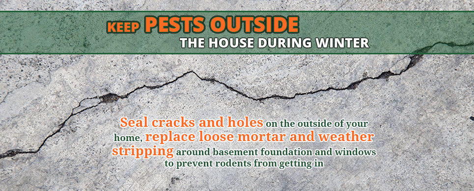 Keep Pests Outside During Winter